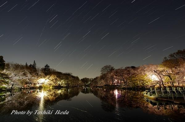 井の頭公園夜桜-2aa.jpg